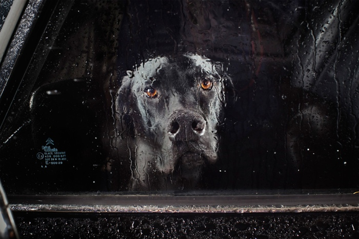 Martin Usborne - The silence of dogs in cars - 1