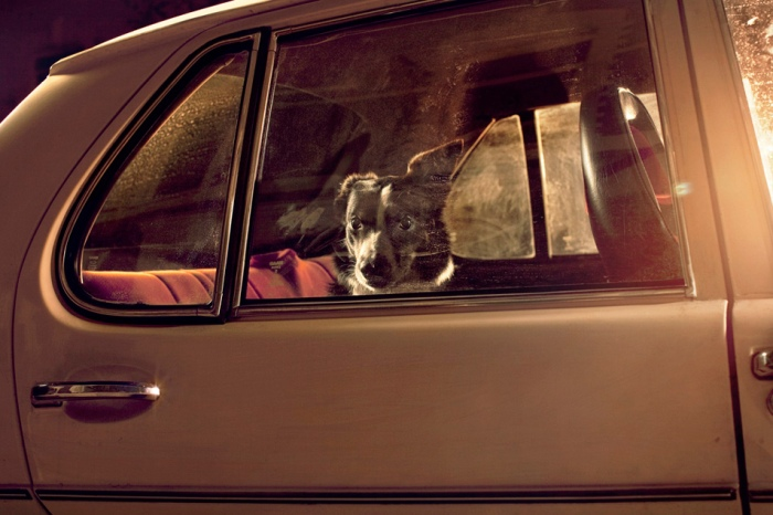 Martin Usborne - The silence of dogs in cars - 2