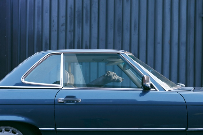 Martin Usborne - The silence of dogs in cars - 3