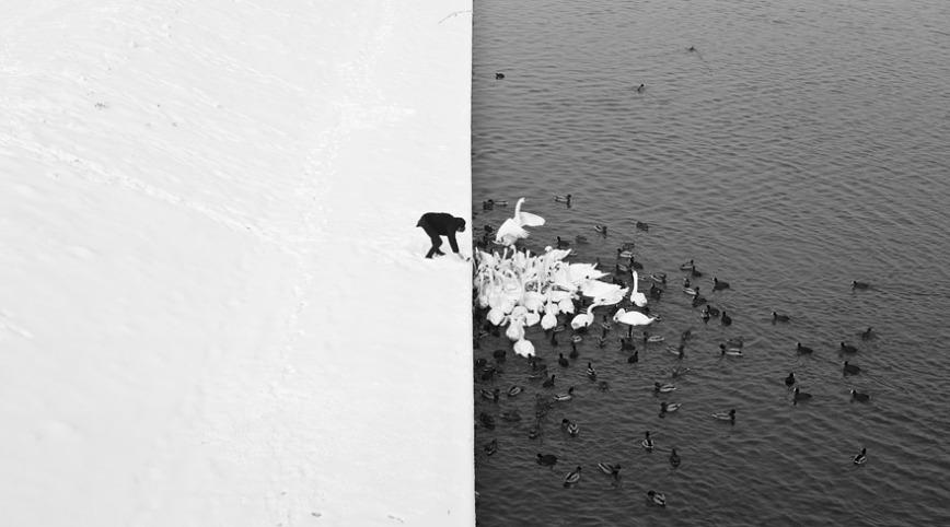man-feeding-swans-marcin-ryczek-1