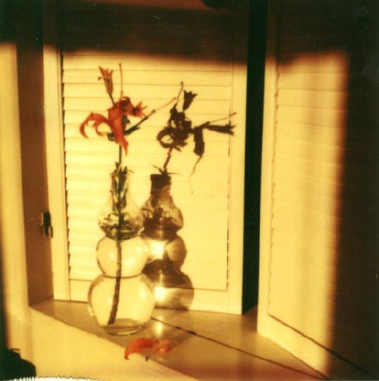 Andre Kertesz - Polaroid - 1