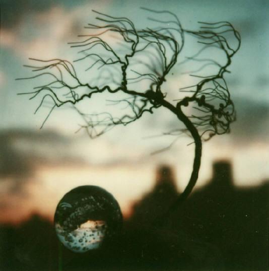 Andre Kertesz - Polaroid - 14