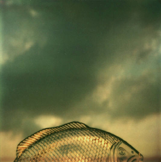 Andre Kertesz - Polaroid - 4