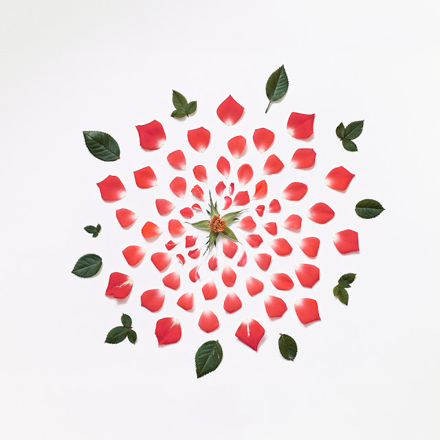 fong-qi-wei-exploded-flowers-red-rose-rag-A3