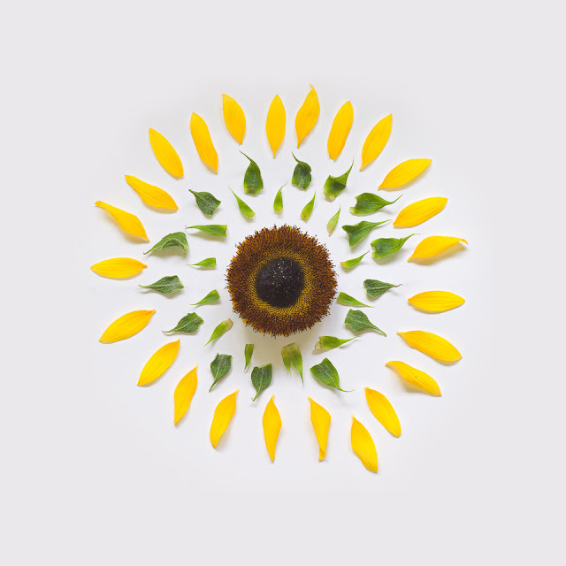 fong-qi-wei-exploded-flowers-sunflower