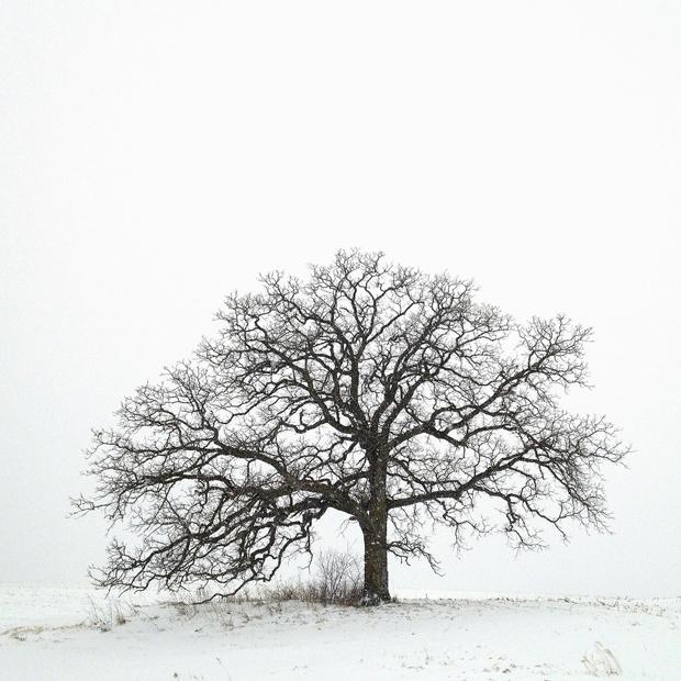 Ese árbol – MarkHirsch