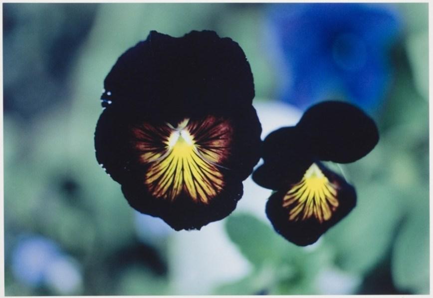 Ernst Haas - Flowers - 3