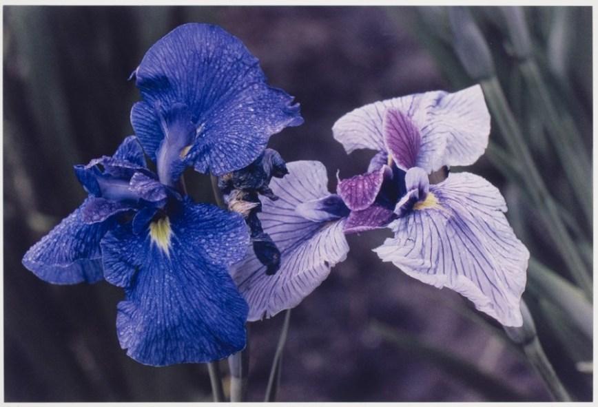 Ernst Haas - Flowers - 5