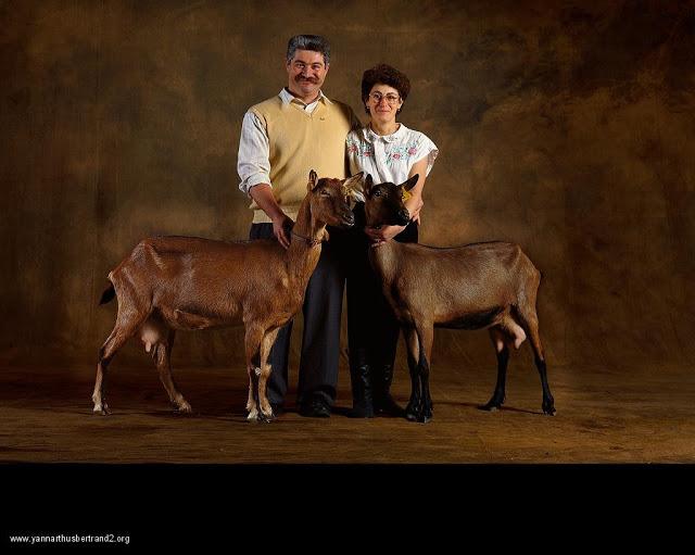 yann-arthus-bertrand-farm-animal-portraits-oberhaslis-dairy-goat