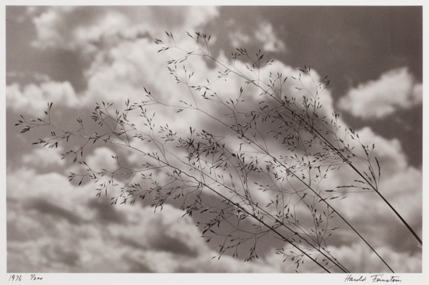 Harold Feinstein - Lace Weeds Blowing with Clouds - Saxtons River -  1976