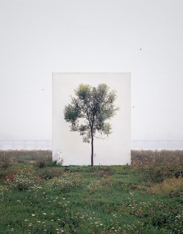 Trees-in-Front-of-Canvasses-01