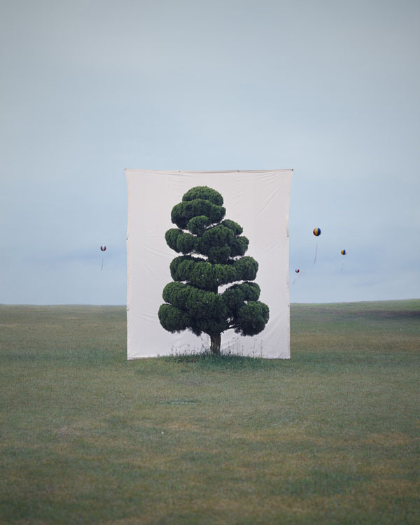 Trees-in-Front-of-Canvasses-02