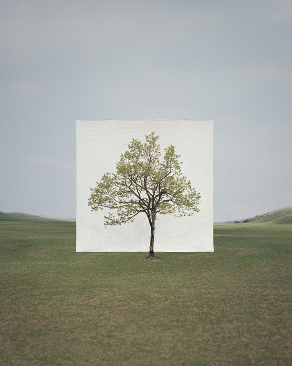 Trees-in-Front-of-Canvasses-04