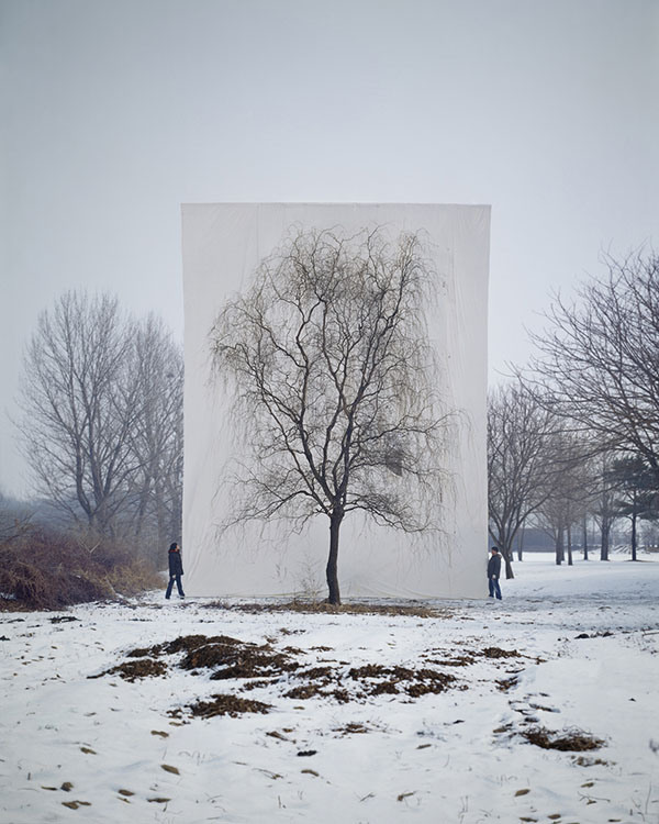 Trees-in-Front-of-Canvasses-07