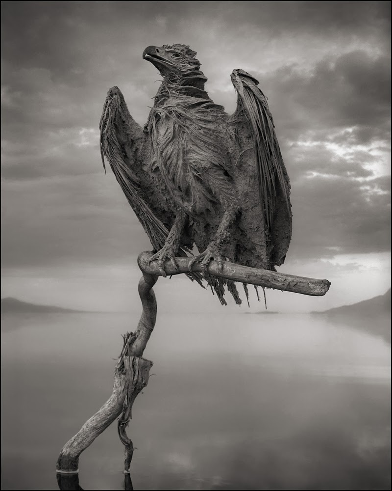 deadly-lake-in-tanzania-calcifies-animals--02Nick Brandt  Calcified Fish Eagle