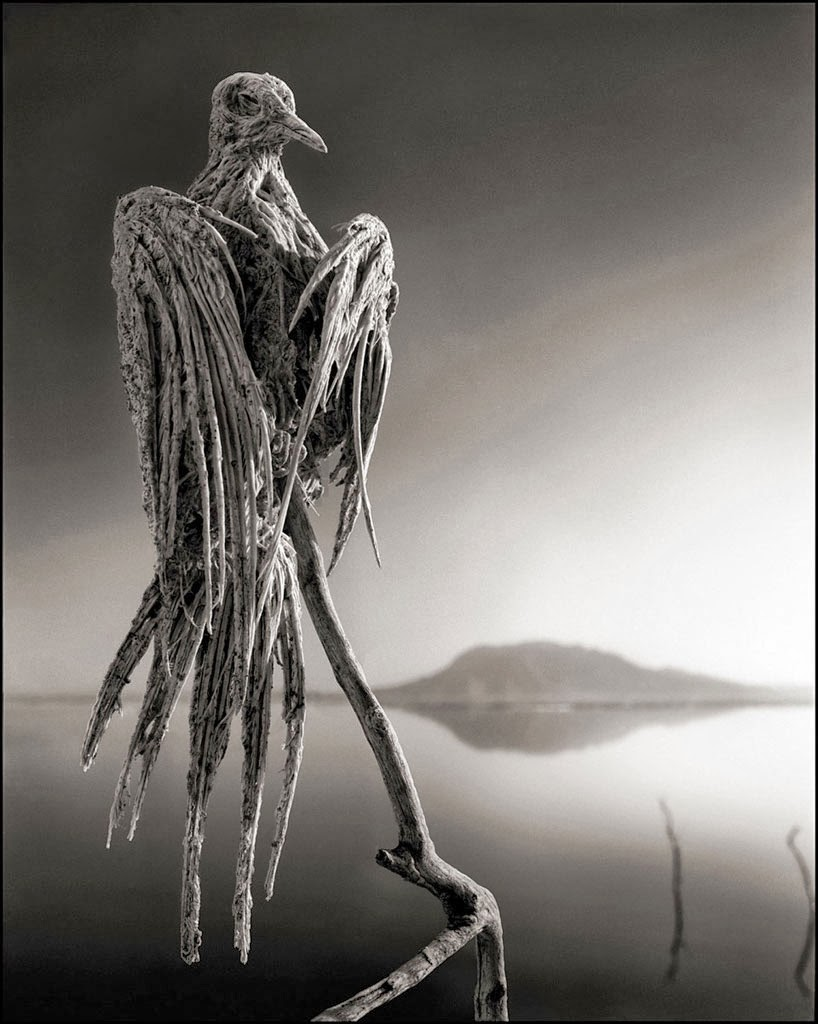 deadly-lake-in-tanzania-calcifies-animals-02Nick Brandt