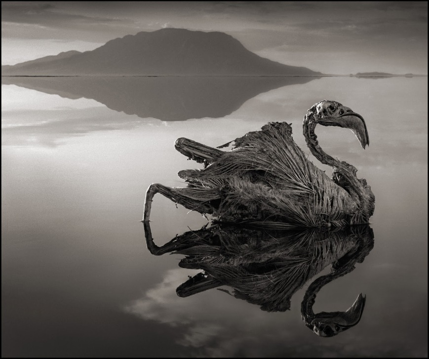 deadly-lake-in-tanzania-calcifies-animals--02Nick Brandt