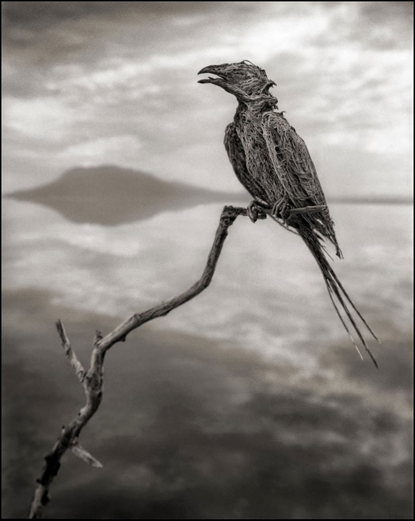 deadly-lake-in-tanzania-calcifies-animals-deadly 02Nick Brandt -05