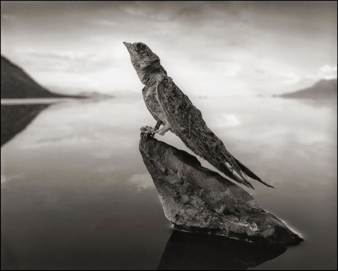 deadly-lake-in-tanzania-calcifies-animals-swallow-02Nick Brandt