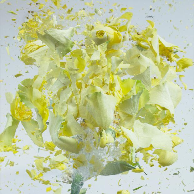 explodingflowers2
