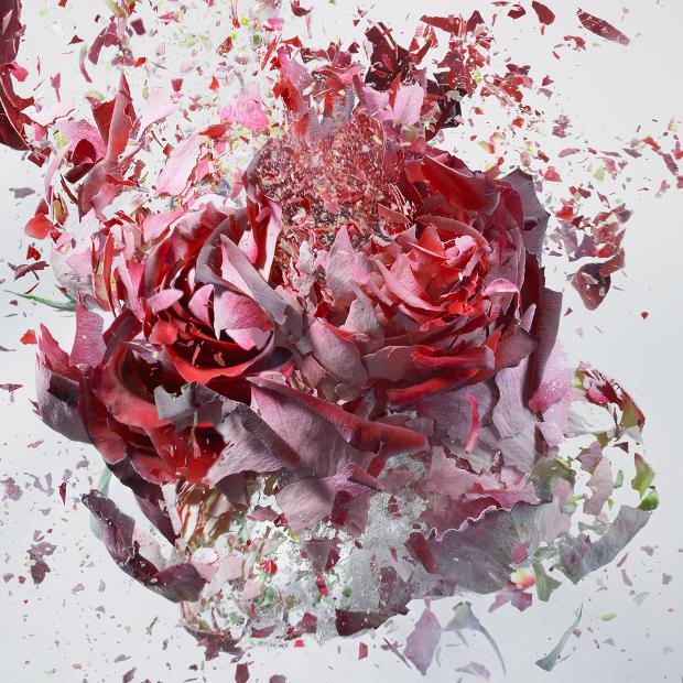 explodingflowers8