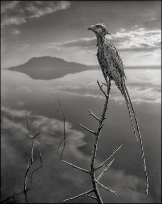 nick-brandt-calcified-bird-lake-natron