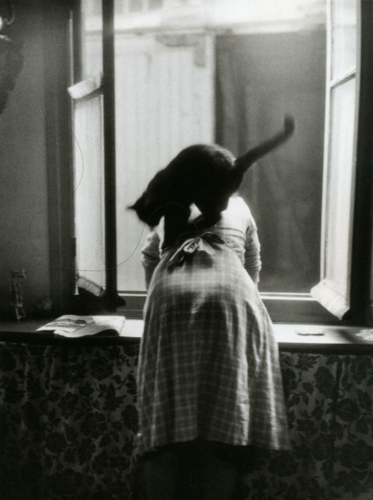 les-chats-by-willy-ronis