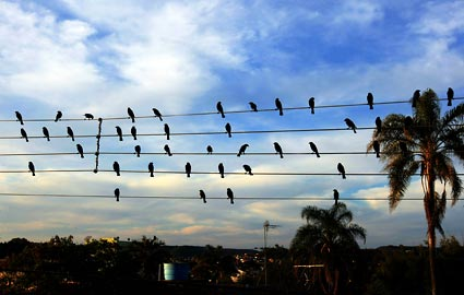 birds-on-a-wire-425ds091609