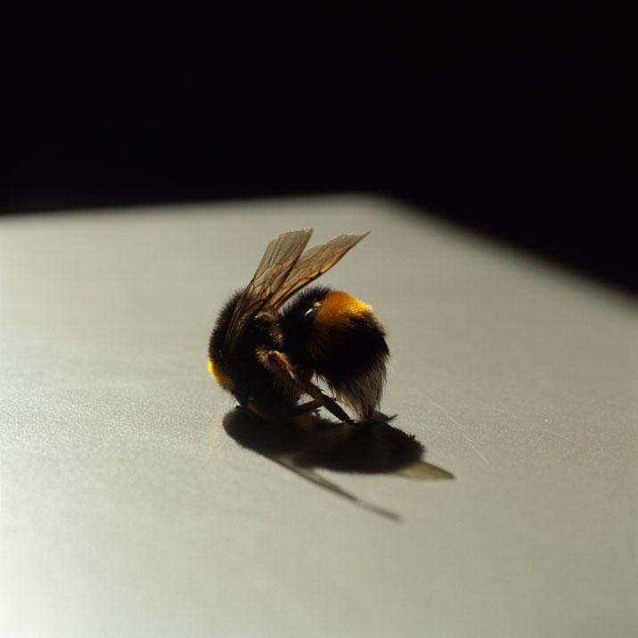 lydia-goldblatt-Bee_6936