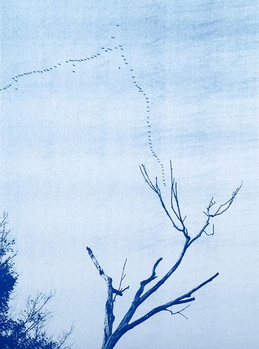 TIM_BARBER_FLOCK_DEAD_TREE_LOW-532x716
