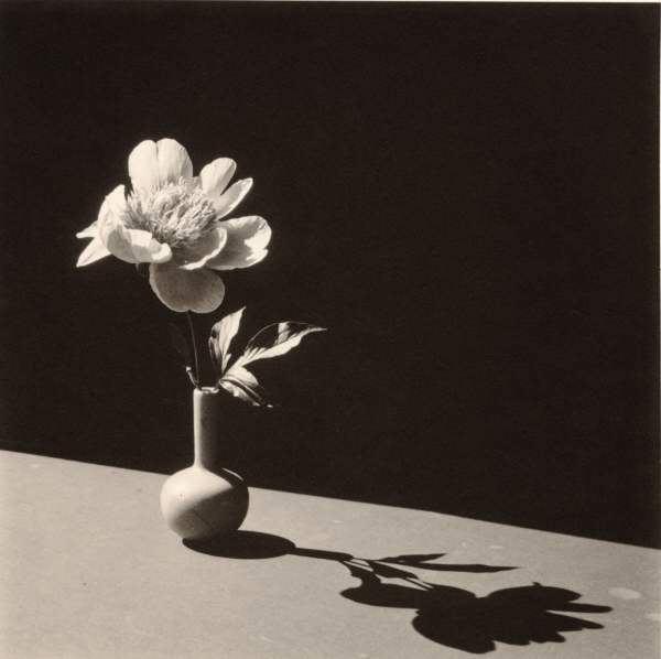 Peony in Broken Blue Vase - Horst P Horst - 1986