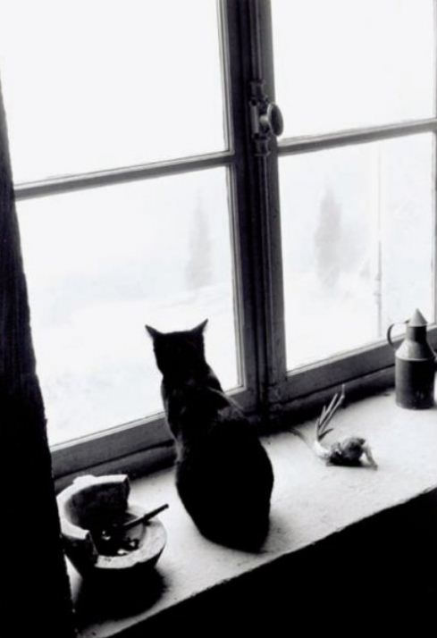 WIlly Ronis - The cat behind the window