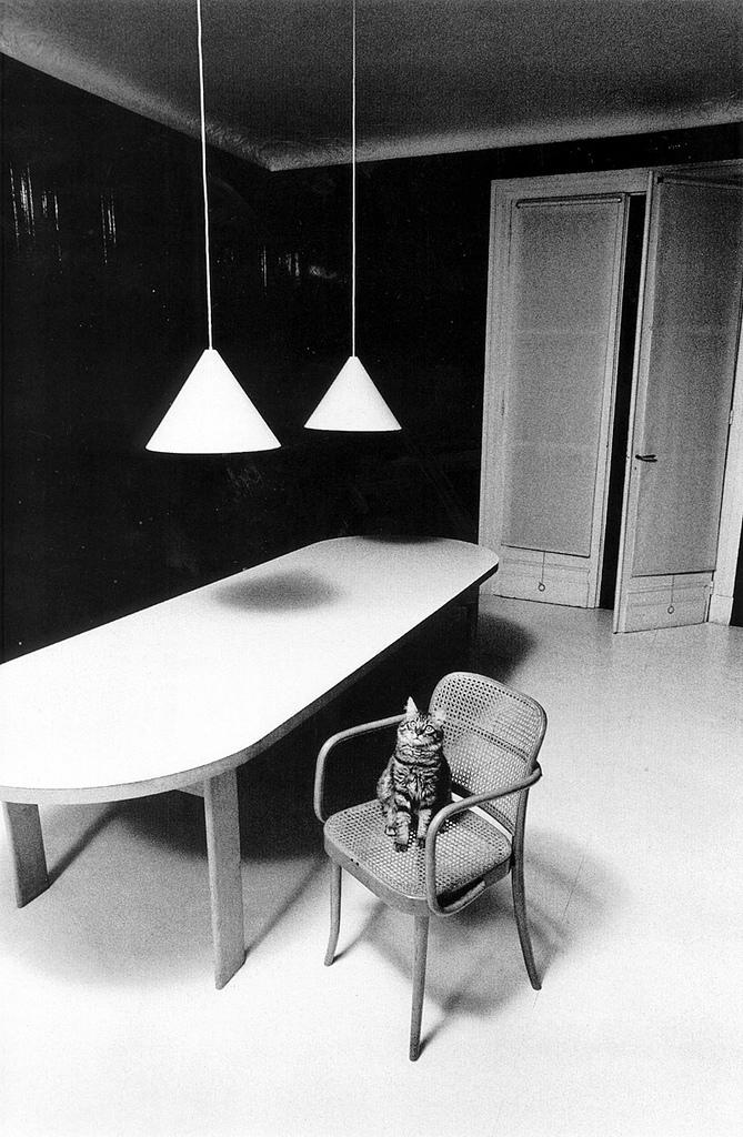 Jeanloup Sieff - Chat solitaire dans un décor inhospitalier - Paris - 1973